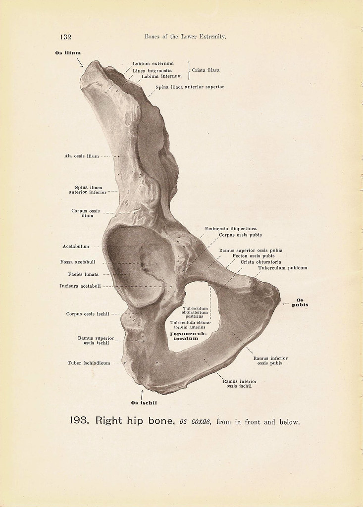 The Right Hip Bone From In Front And Below Black And White Flickr