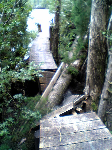 Huon Pine crushing the board walk on the Gordon River | by tomw99au