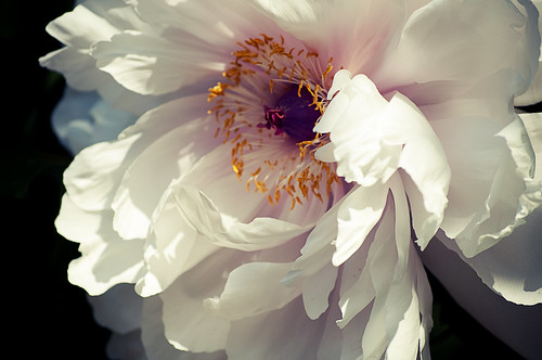 White Flower | by AliJG