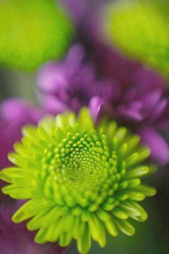 A Green & Purple Bouquet | by jomak14
