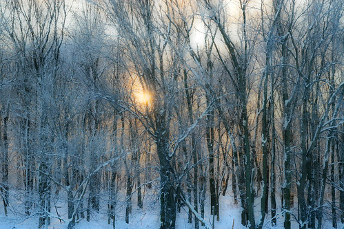 Sun Rise in the Winter Trees | by rreiffenberger