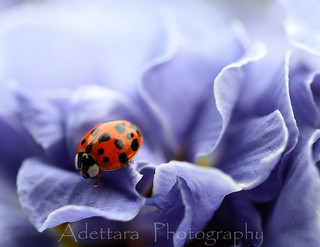 ~I Am Happy To Be A Lady Today~ | by Adettara Photography