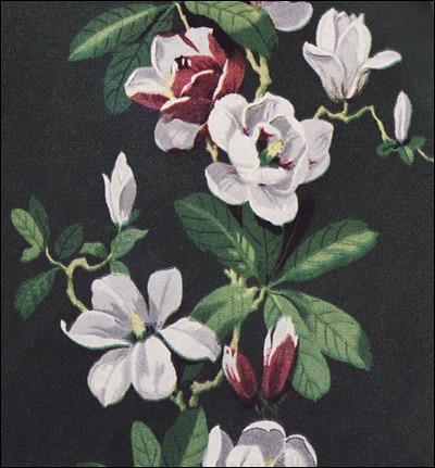 gardenia magnolia wallpaper - photo #20