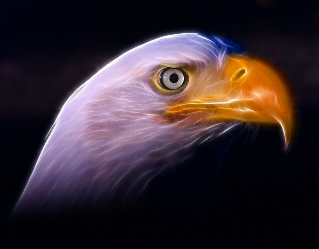 Americas National Symbol The American Bald Eagle In All Flickr