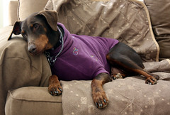 THE CONSUMMATE COUCH POTATO | by Doggies Are From Heaven