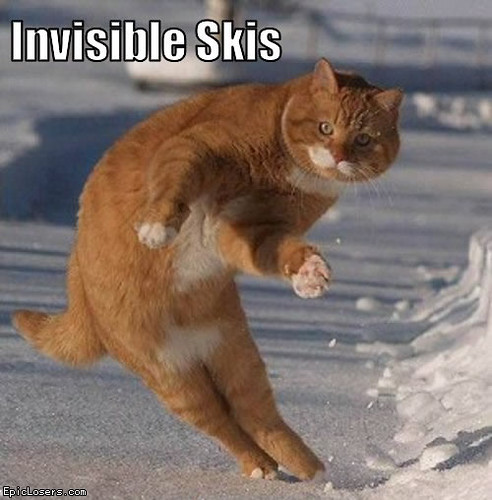 Invisible Skis Lolcats Funny Cats Olypics Snow By Mylolcats