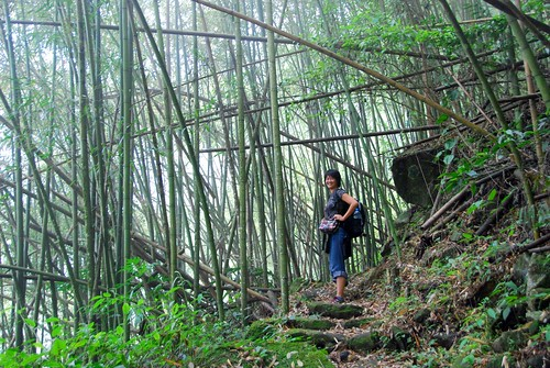 bamboo forest, fenqihu-rueili historic trail | by hopemeng