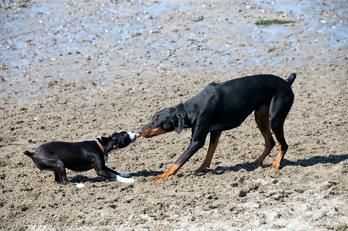 Last Minute Dog Friendly Hotels In New Forest