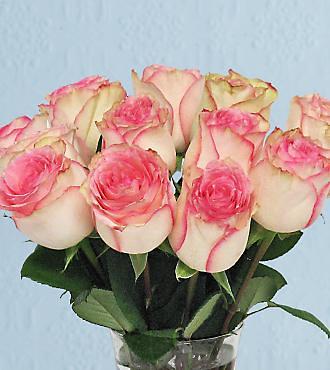 romantic flowers esperance roses this pink esperance var flickr