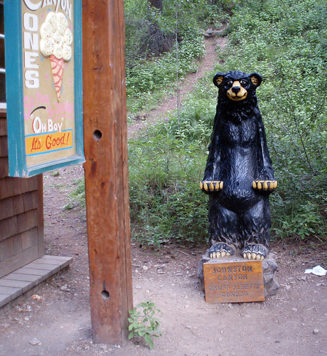 Johnston canyon bear at trailhead at the johnston canyon for A t the salon johnstone