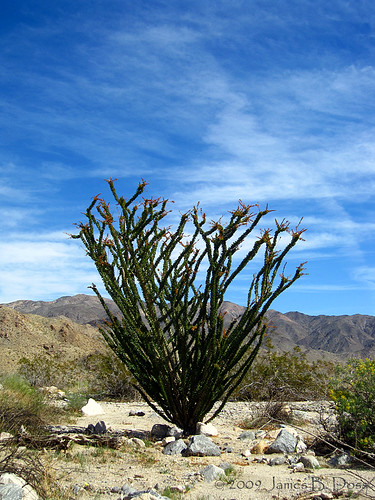 Ocotillo | by W9JIM
