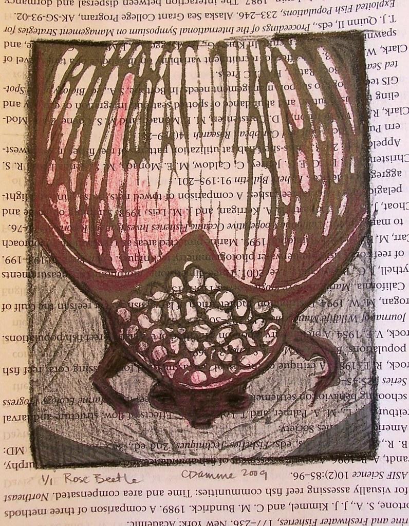 Rose Beetle Hand Colored Linocut
