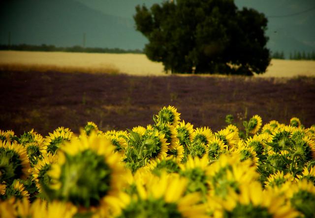 Agriculture en couleur