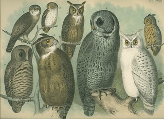 vintage owls | by pomegranates