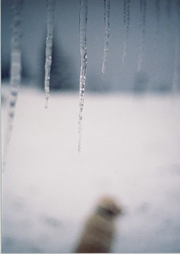Icicles | by davies.thom