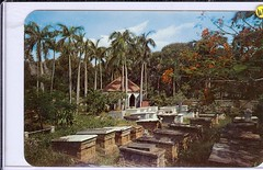 St. Thomas Virgin Island Jewish Cemetery Caribbean scan1054 | by stephaniecomfort