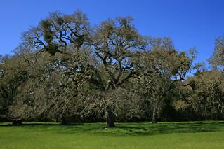 Filoli Majestic Oak Living Rooms Valspar