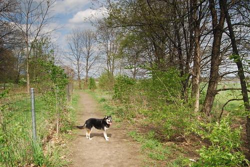 Large Dog Run Ireland