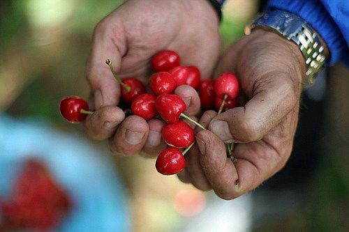 handful of cherries | by David Lebovitz
