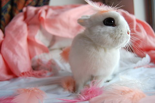 bunny with the feathers | by somanycupcakes