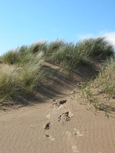 Dune Jumpin' | by chrisper2009