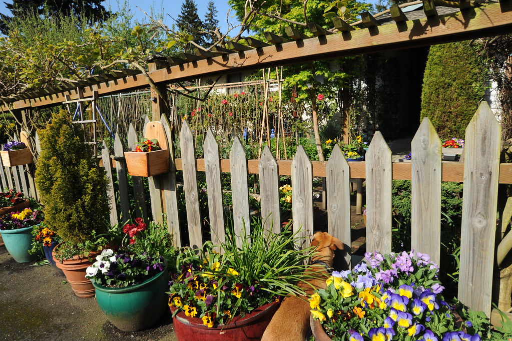 ... Seattle Continuous Garden, Pots, Fence, Growth Guides, Front Yard,  Broadview, Seattle