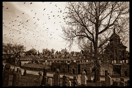 A Murder of Crows | by A. Strakey