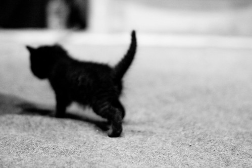 Black kitten | by Mourner