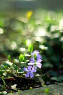 Periwinkles & Swirly Highlights | by jomak14