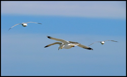 Seagull Fun | by Sue90ca Special Air Quality Warning In Place
