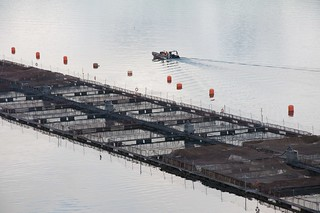 Farmed salmon pens 4 | by Sam Beebe