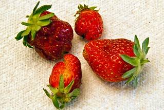 First Strawberries | by Images by John 'K'