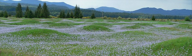 Mima Mounds, Camas Meadows