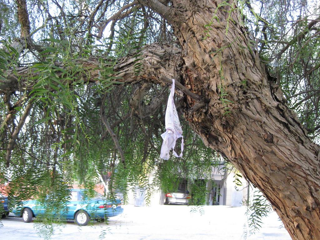 panties in a tree ... panties in a tree | by bittergreens