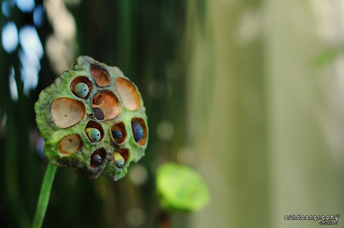 Macro Photowalk II :) | by Sir Mart Outdoorgraphy™