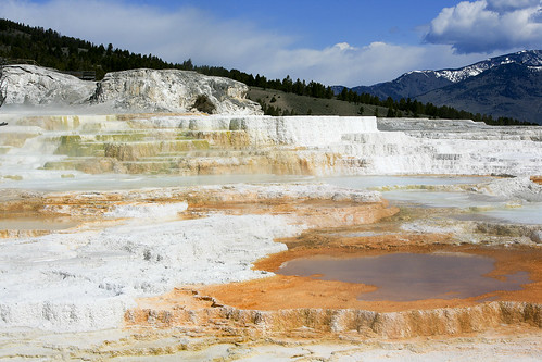 Mammoth Hot Springs | by road triper