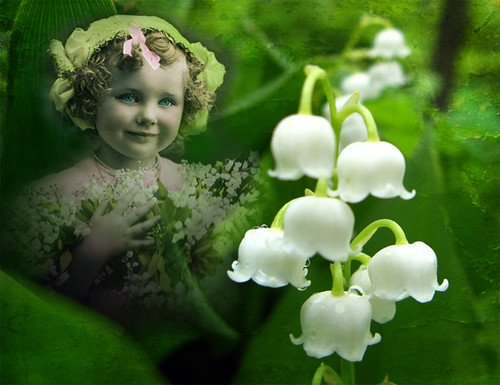 Lily of the Valley, Vintage Girl, Flowers & Textures | by Beverly & Pack