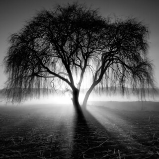 Arbol Luminoso | by Moises Levy L