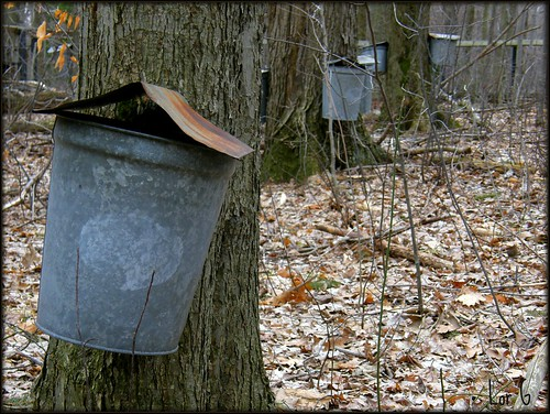 Maple Syrup Time  In Pennsylvania | by Lori Garske