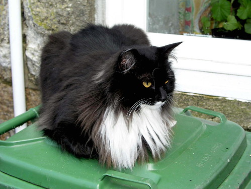 Long Haired Cat Breed That Doesn