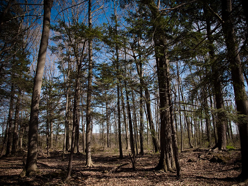 Trees at Beamer Conservation Area | by Matthew Burgio