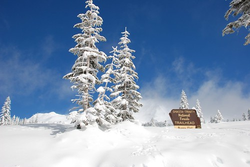 Bunny Flat Mt Shasta Snow Shoeing