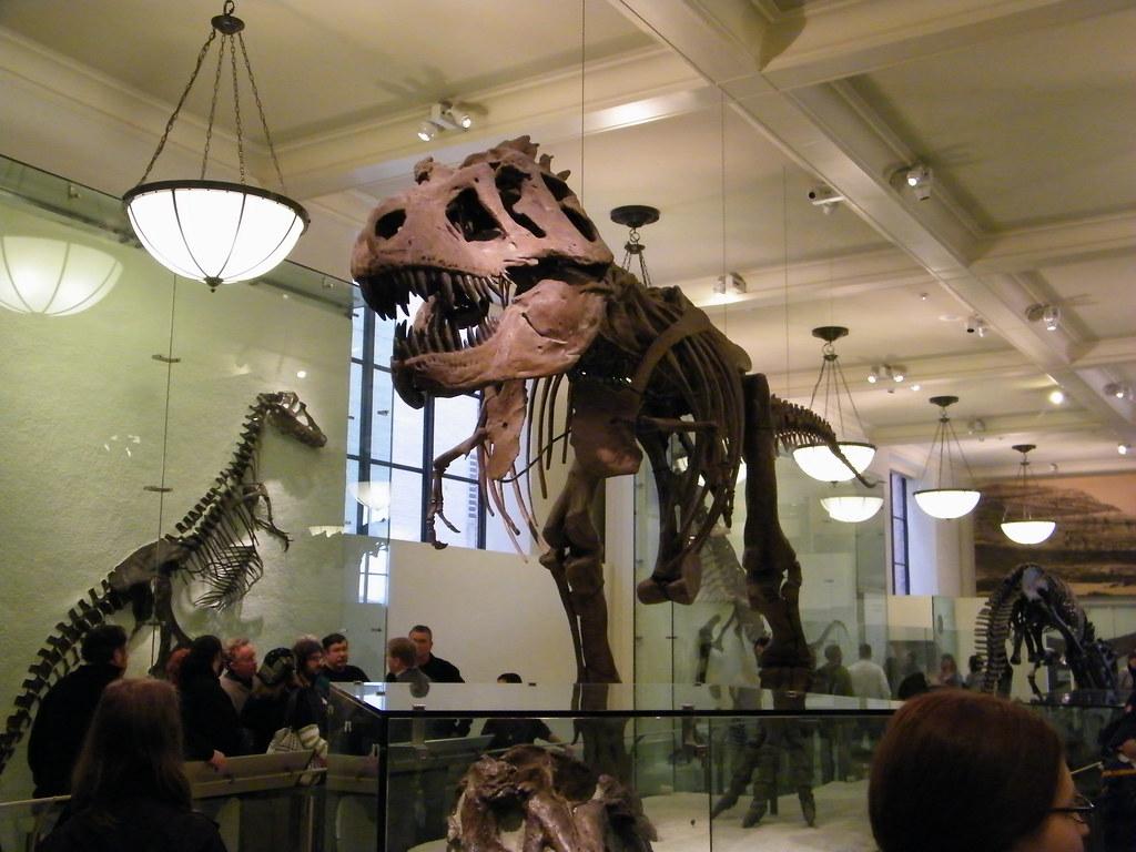 American Museum Of Natural History Secrets
