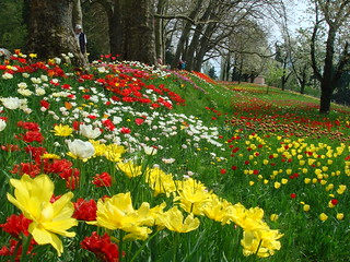 Spring in Mainau Island... | by ***irene***
