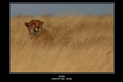 Etosha - Emerging from the bush | by Mangini Adalberto & Laura - sorry busy - few time