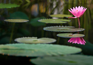 Lily Pad Path | by formula410