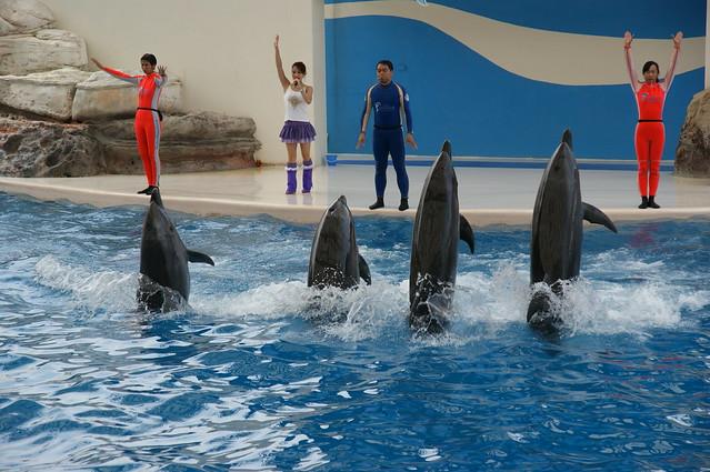 2009.06.07~09 花蓮遠雄悅來大飯店.海洋公園 234