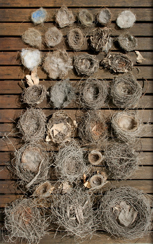Bird's Nest Collection | by gooseflesh