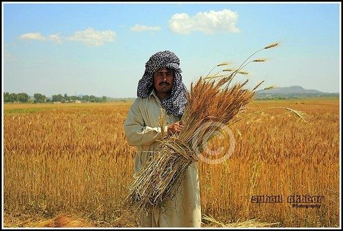 Harvesting. | by Suh@il