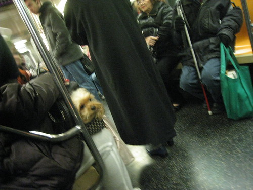 Nyc Dog Bag Train